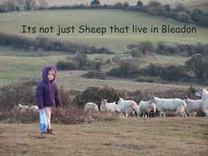 Bleadon Sheep